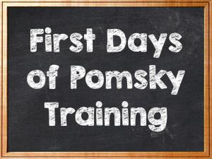 First Days of Pomsky Training