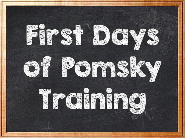 Pomsky Puppy Training Pomsky Pals
