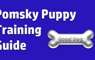 Pomsky Puppy Training