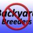 Backyard Breeders