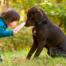 Dog Safety for Kids