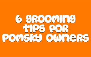 6-grooming-tips-for-pomsky-owners-1