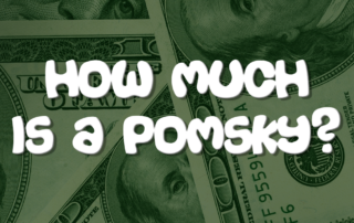 How Much Is A Pomsky?