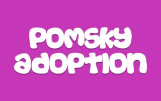 Pomsky Adoption
