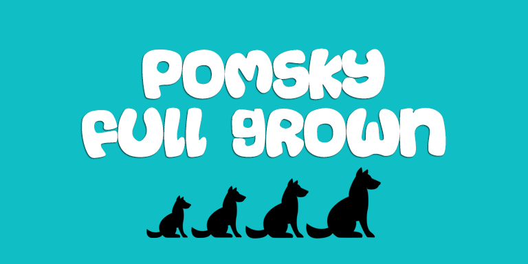 Pomsky Full Grown