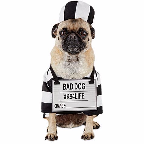 Dog Prisoner Halloween Costume