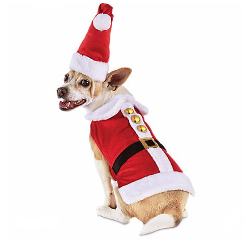 Santa Suit For Your Pomsky