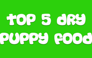 top-5-dry-puppy-food-for-pomskies