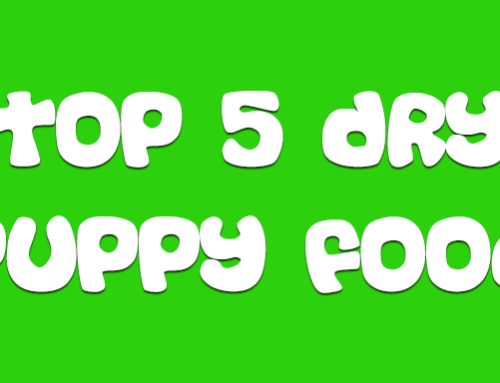 Top 5 Dry Puppy Food For Pomskies