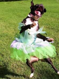 Teach Your Dog To Dance