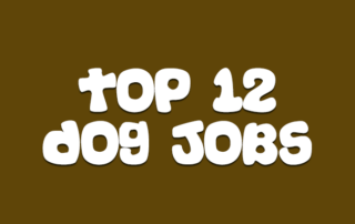 Top 12 Dog Jobs