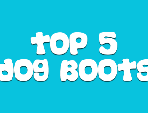 Top 5 Dog Boots For Pomskies