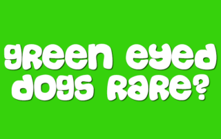 How Rare Are Green Eyed Dogs
