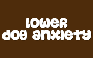 How To Lower Your Dog's Anxiety