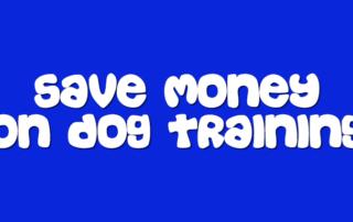 5 Tips To Save Money On Dog Training