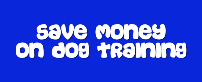 5 Tips To Save Money On Dog Training