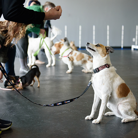 How To Get Your Dog To Socialize With Other Dogs